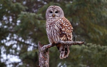 Animal - Owl Wallpapers and Backgrounds ID : 337514