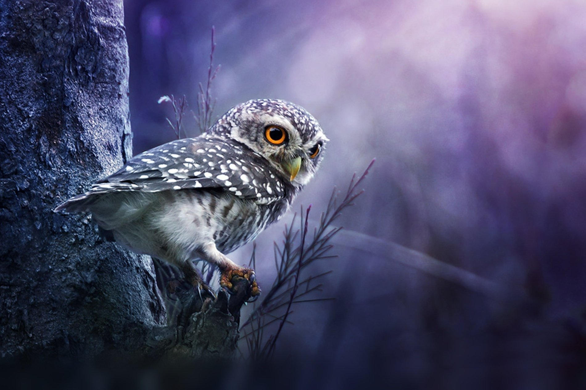712 owl hd wallpapers | background images - wallpaper abyss