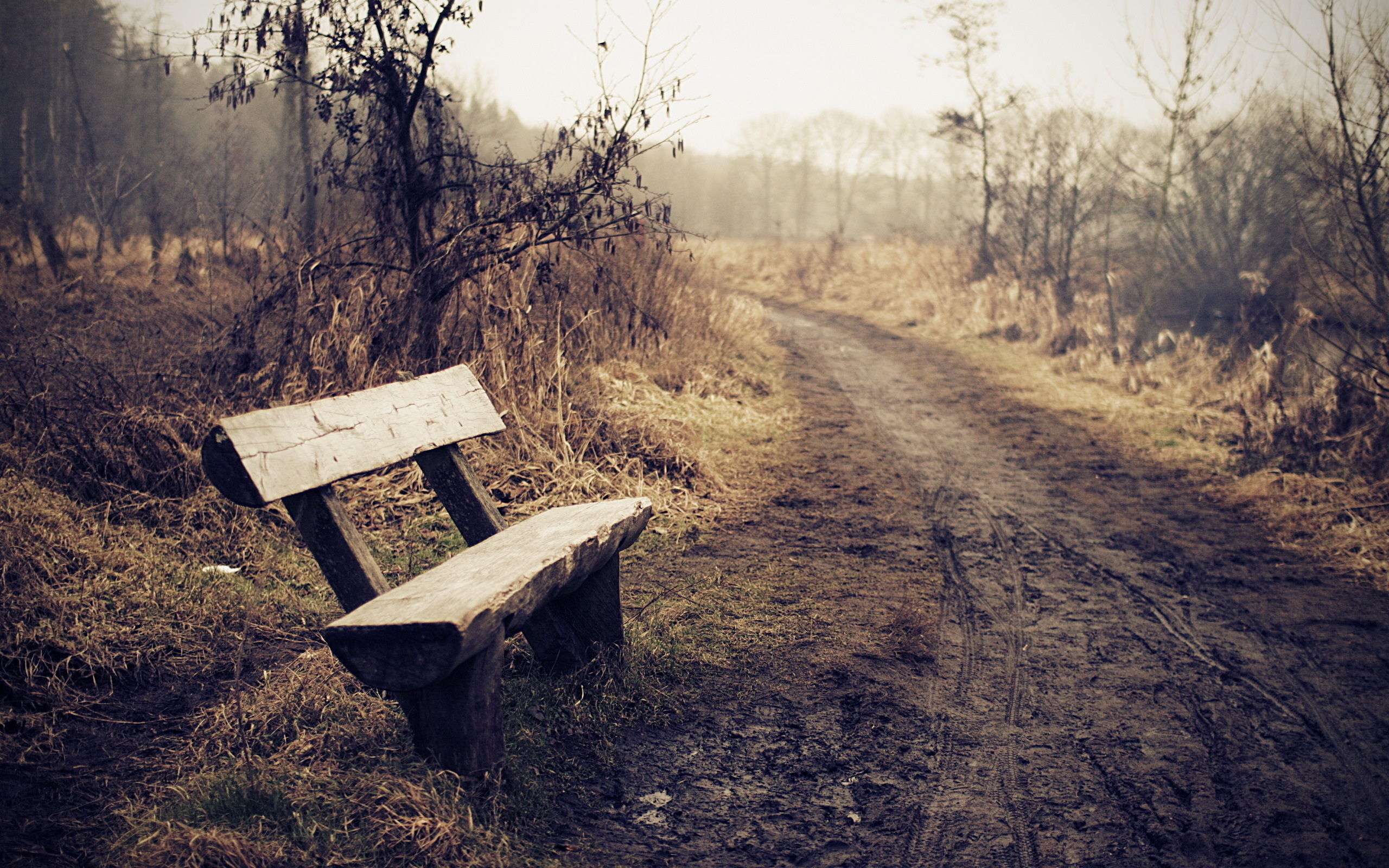 Bench Full Hd Wallpaper And Background 2560x1600 Id 339167