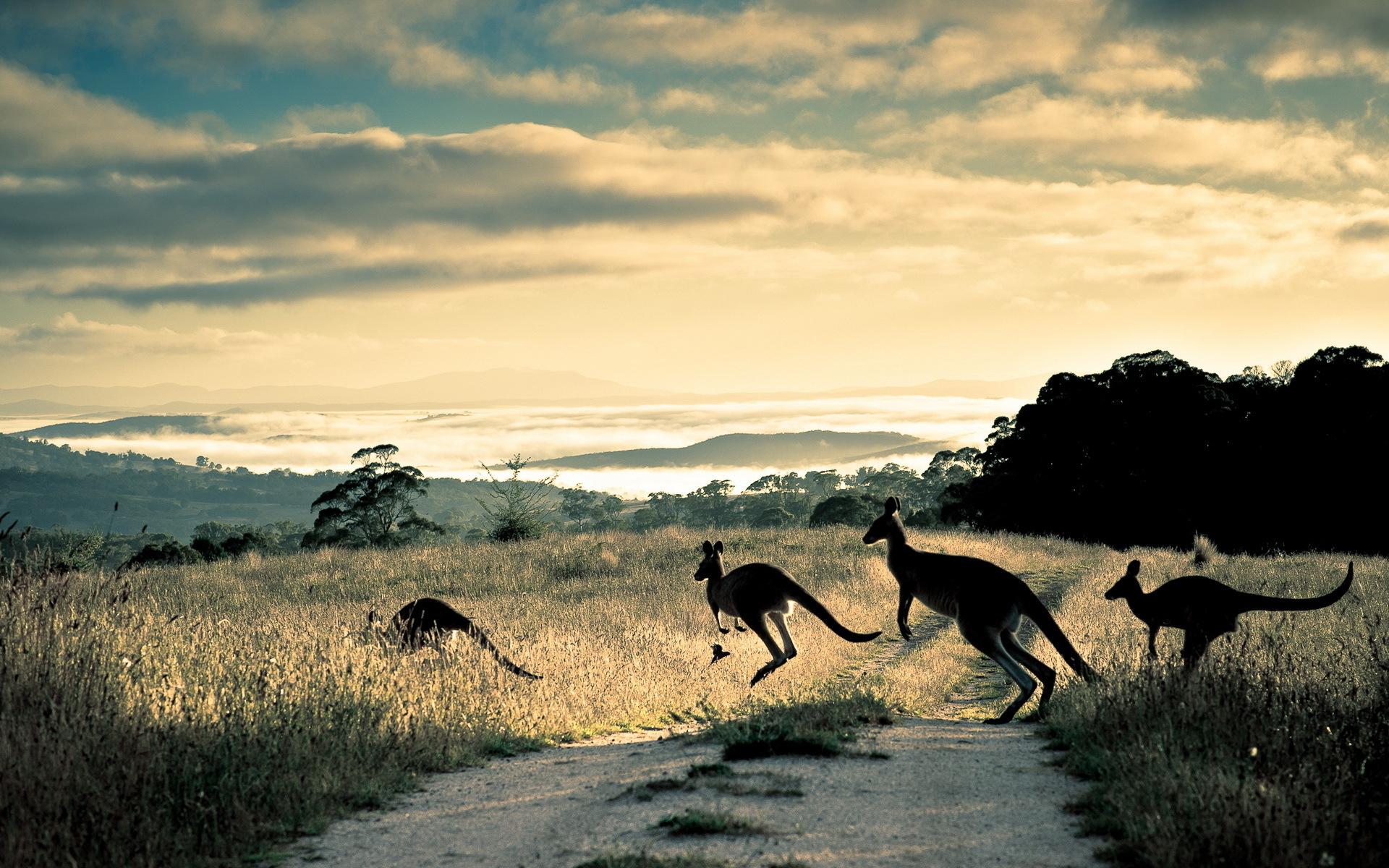 Golf Travel Covers Australia