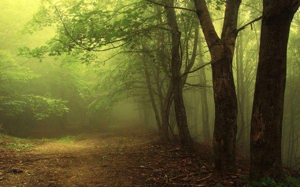 Tierra/Naturaleza Niebla Árbol Naturaleza Camino Bosque Fondo de pantalla HD | Fondo de Escritorio
