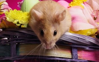 Tier - Hamster Wallpapers and Backgrounds ID : 340704