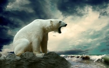 Animal - Polar Bear Wallpapers and Backgrounds ID : 341422