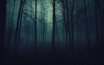 Dark - Forest Wallpapers and Backgrounds ID : 342360