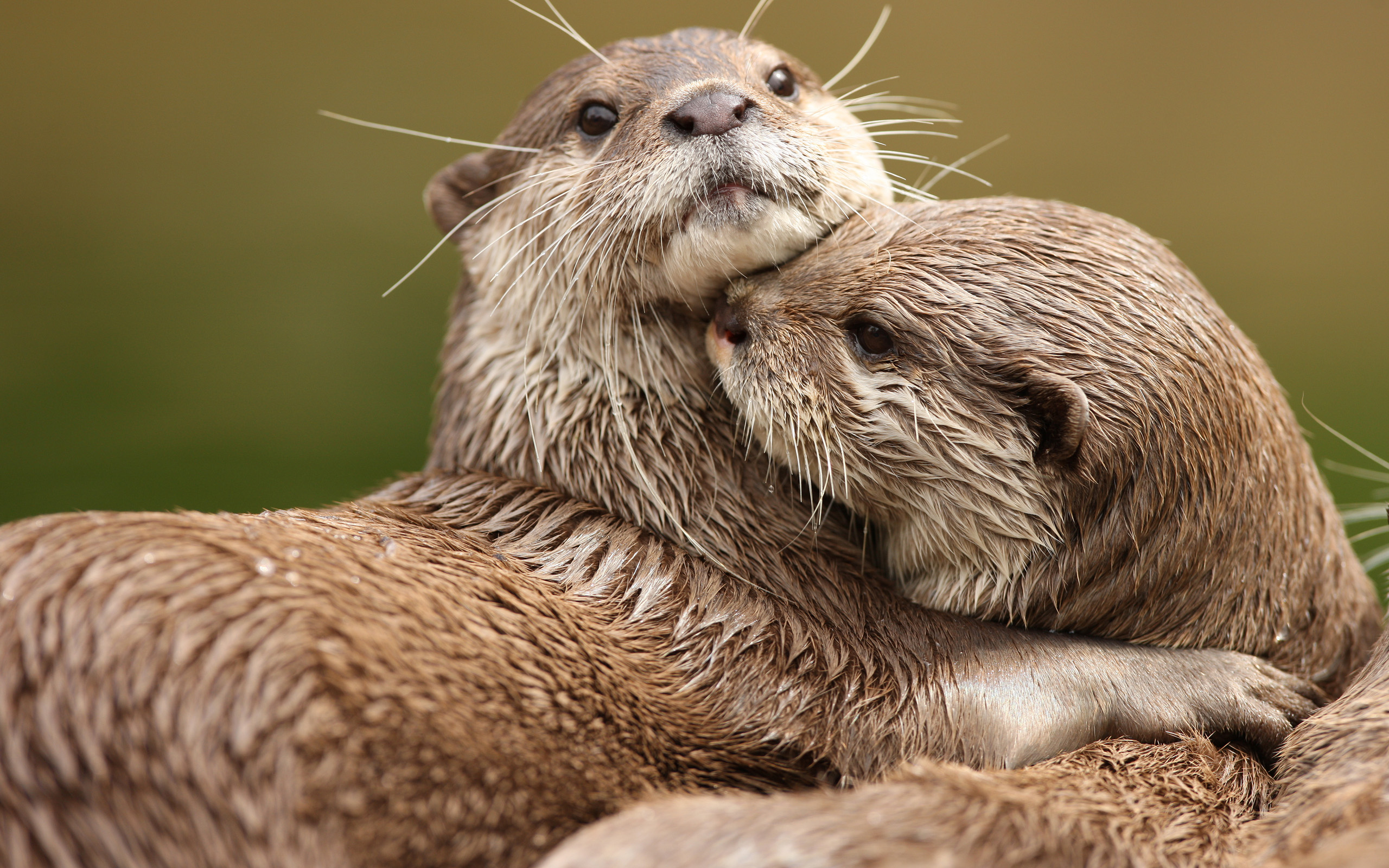 76 Otter Hd Wallpapers Background Images Wallpaper Abyss