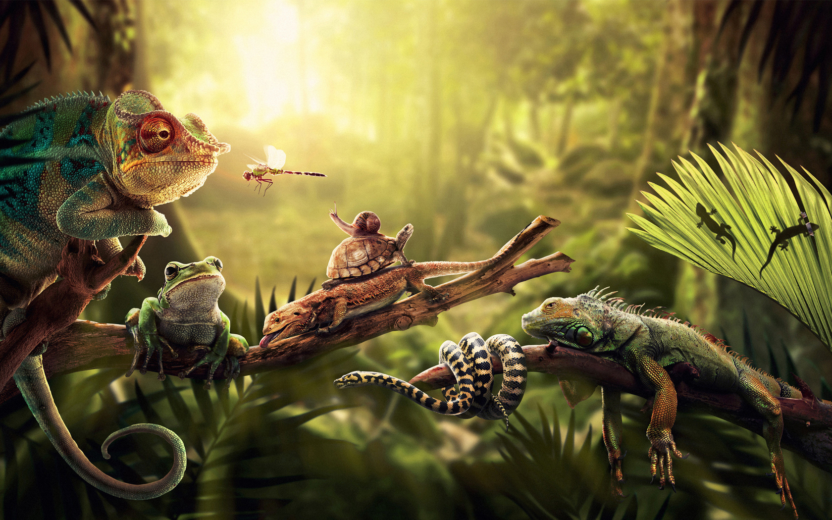 Funny 3d Animal Turtle Wallpapers Hd: Reptile Wallpaper And Background Image