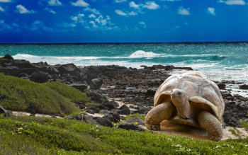 Animal - Turtle Wallpapers and Backgrounds ID : 343463