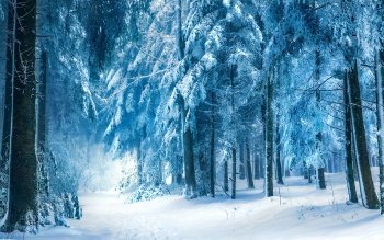 Earth - Winter Wallpapers and Backgrounds ID : 343779