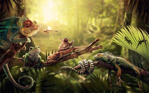 Animal Reptile Reptiles HD Wallpaper   Background Image