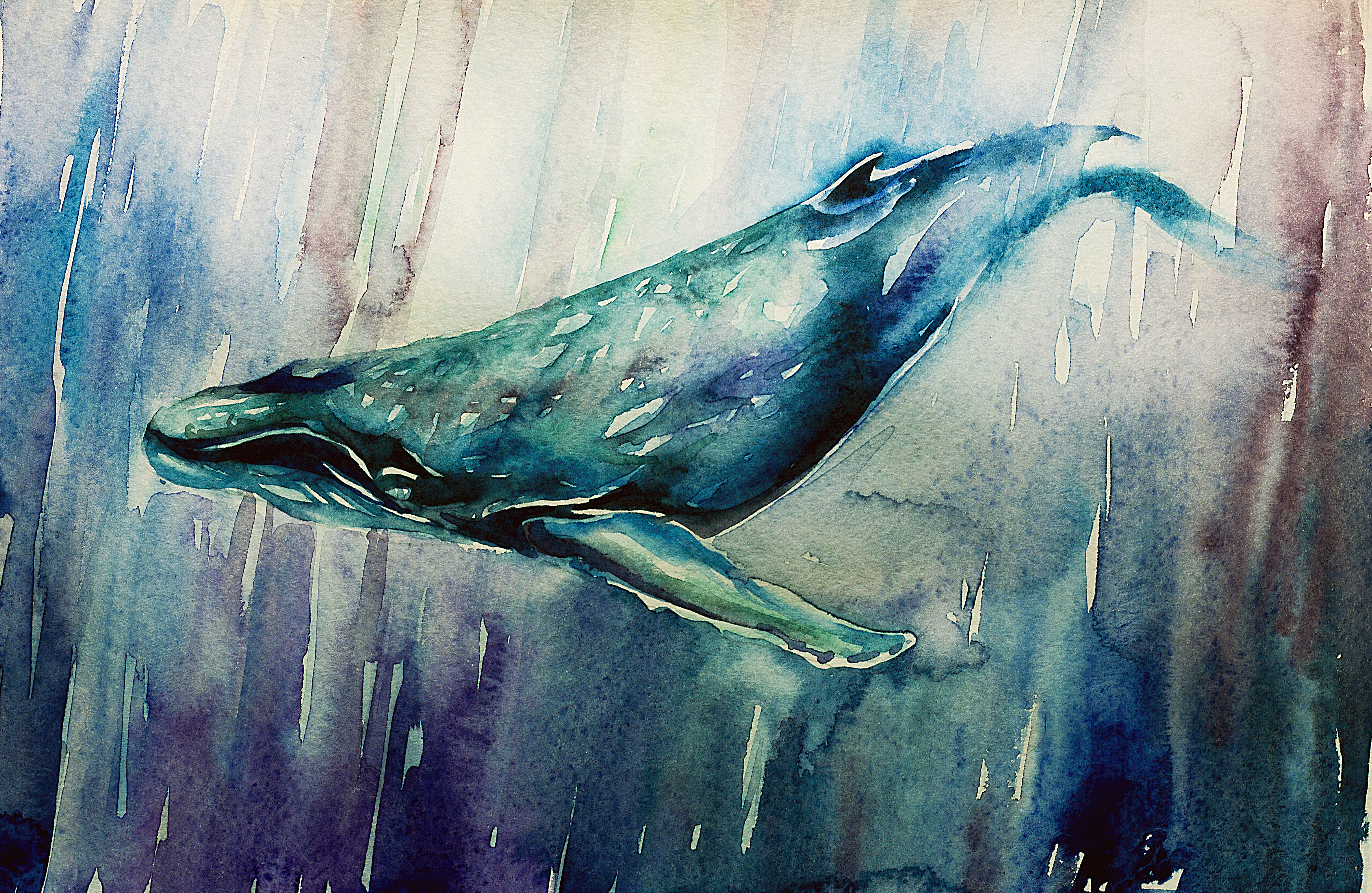 Orca Wall Painting