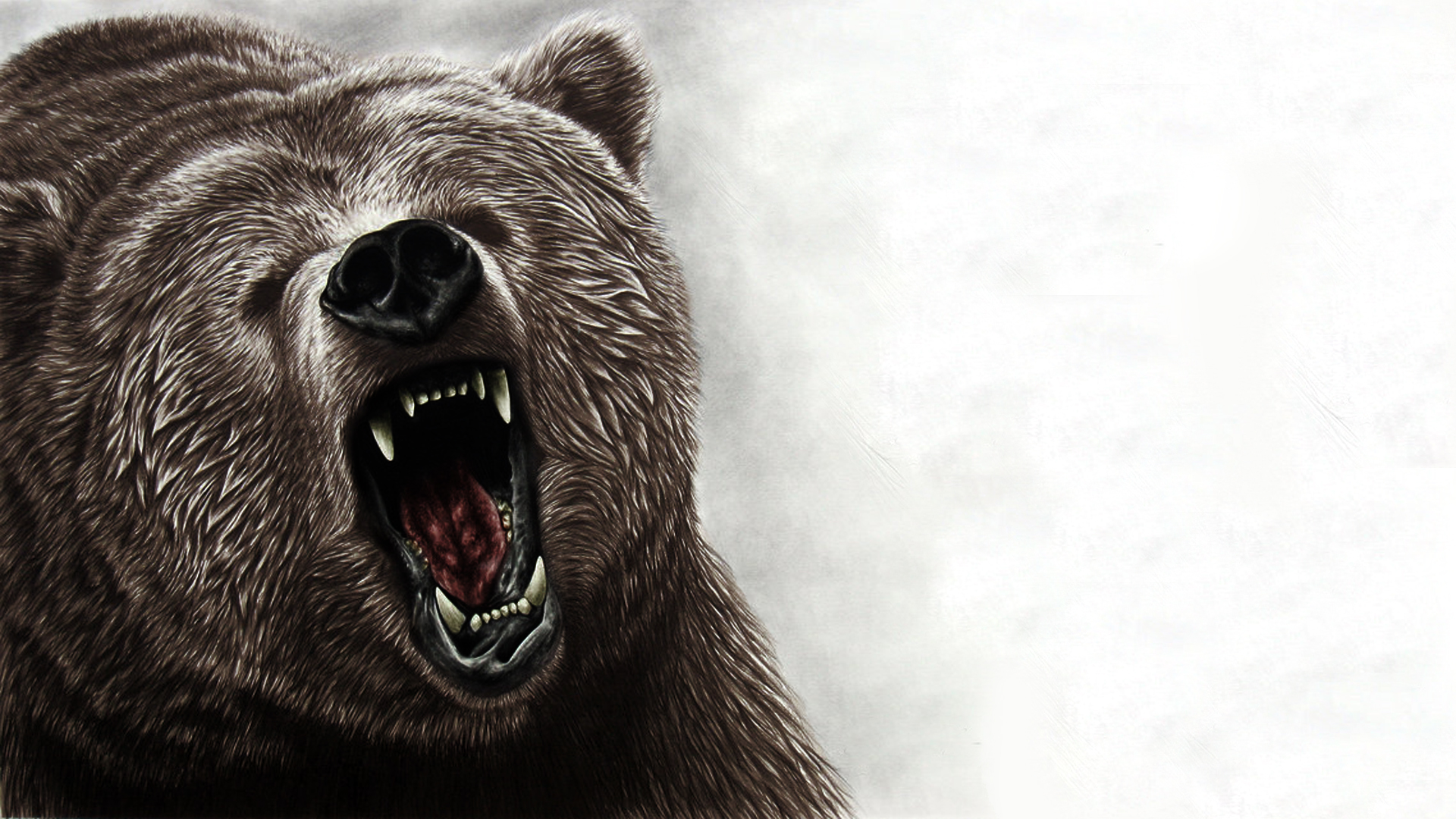 Bear full hd wallpaper and background image 1920x1080 for Animal wallpaper for walls
