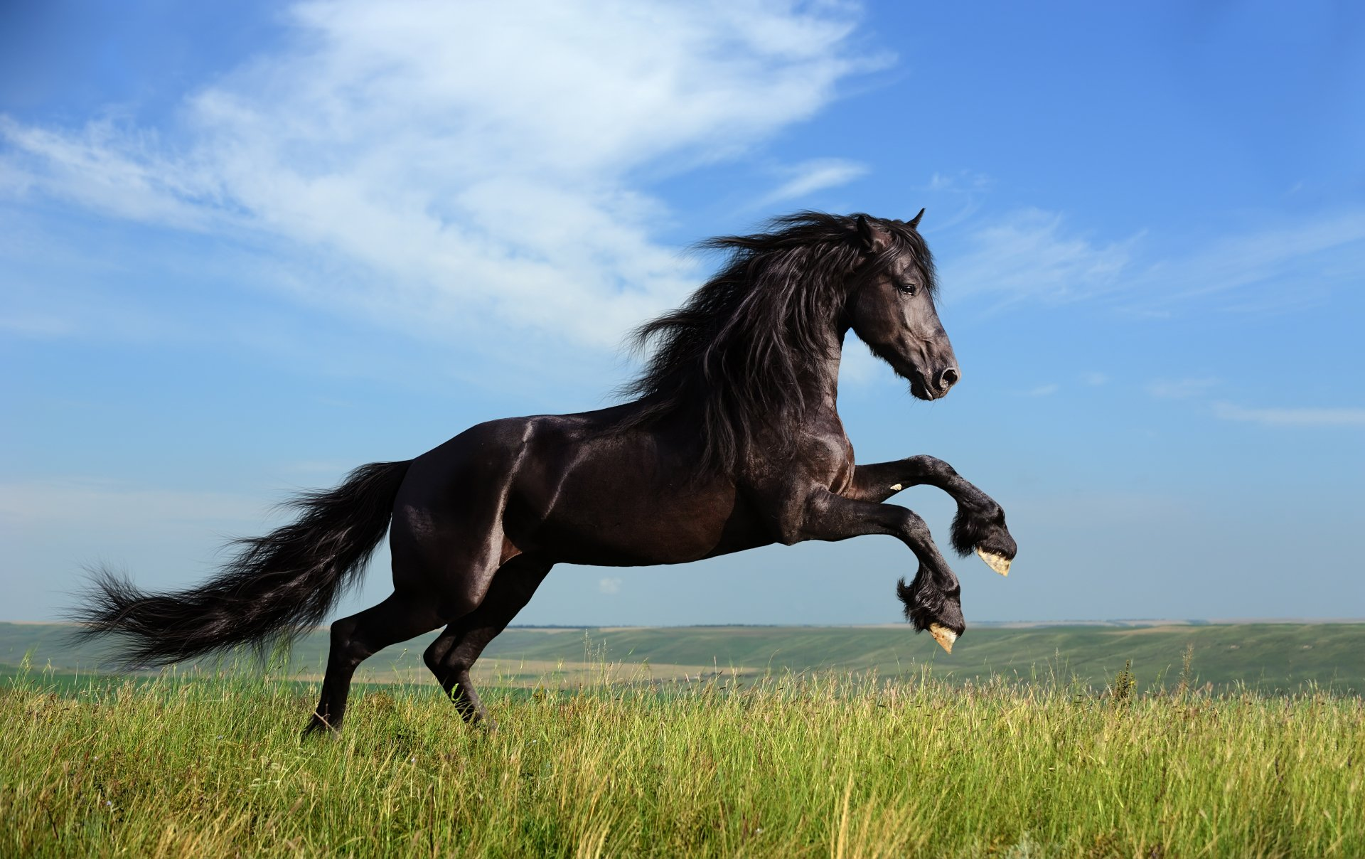 222 4k Ultra Hd Horse Wallpapers Background Images Wallpaper Abyss