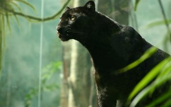 Animal - Black Panther Wallpapers and Backgrounds ID : 347818