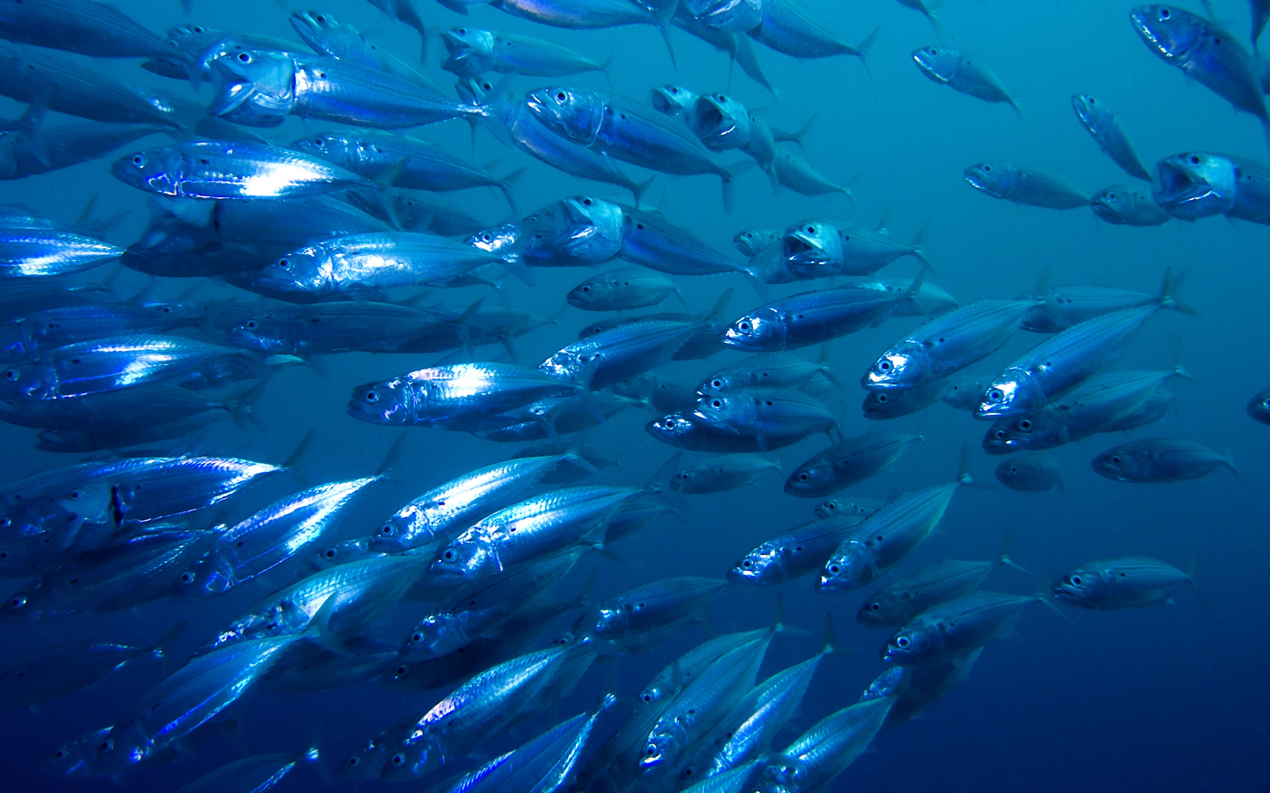 Fish Full HD Wallpaper and Background | 2560x1600 | ID:348737