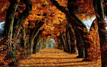 Earth - Autumn Wallpapers and Backgrounds ID : 348209