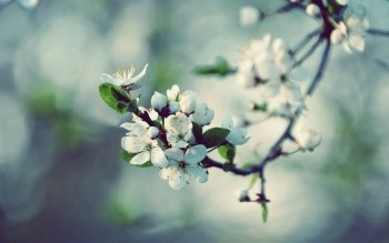 Earth - Blossom Wallpapers and Backgrounds ID : 348233