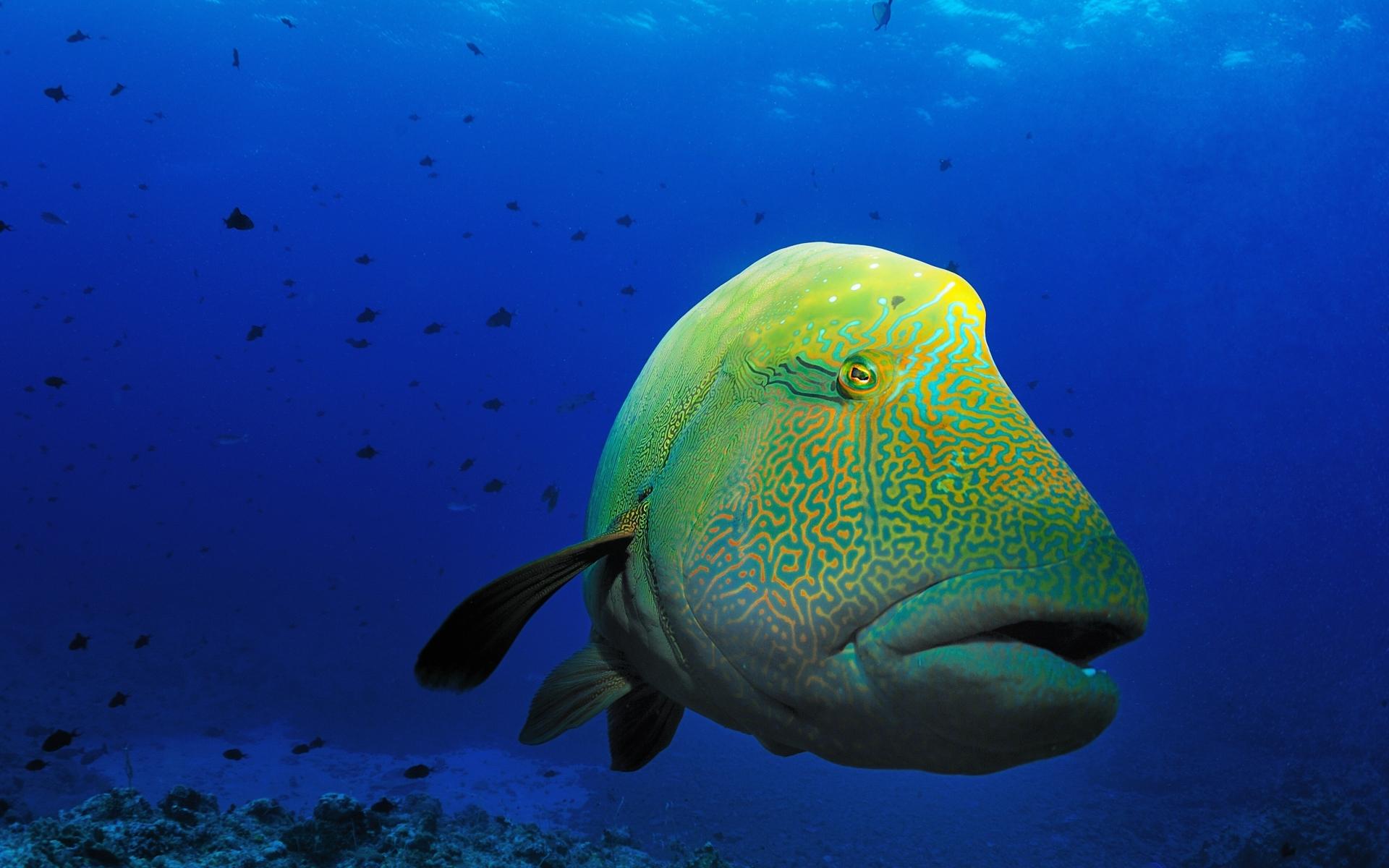 fish marlin desktop 1920x1200 - photo #32