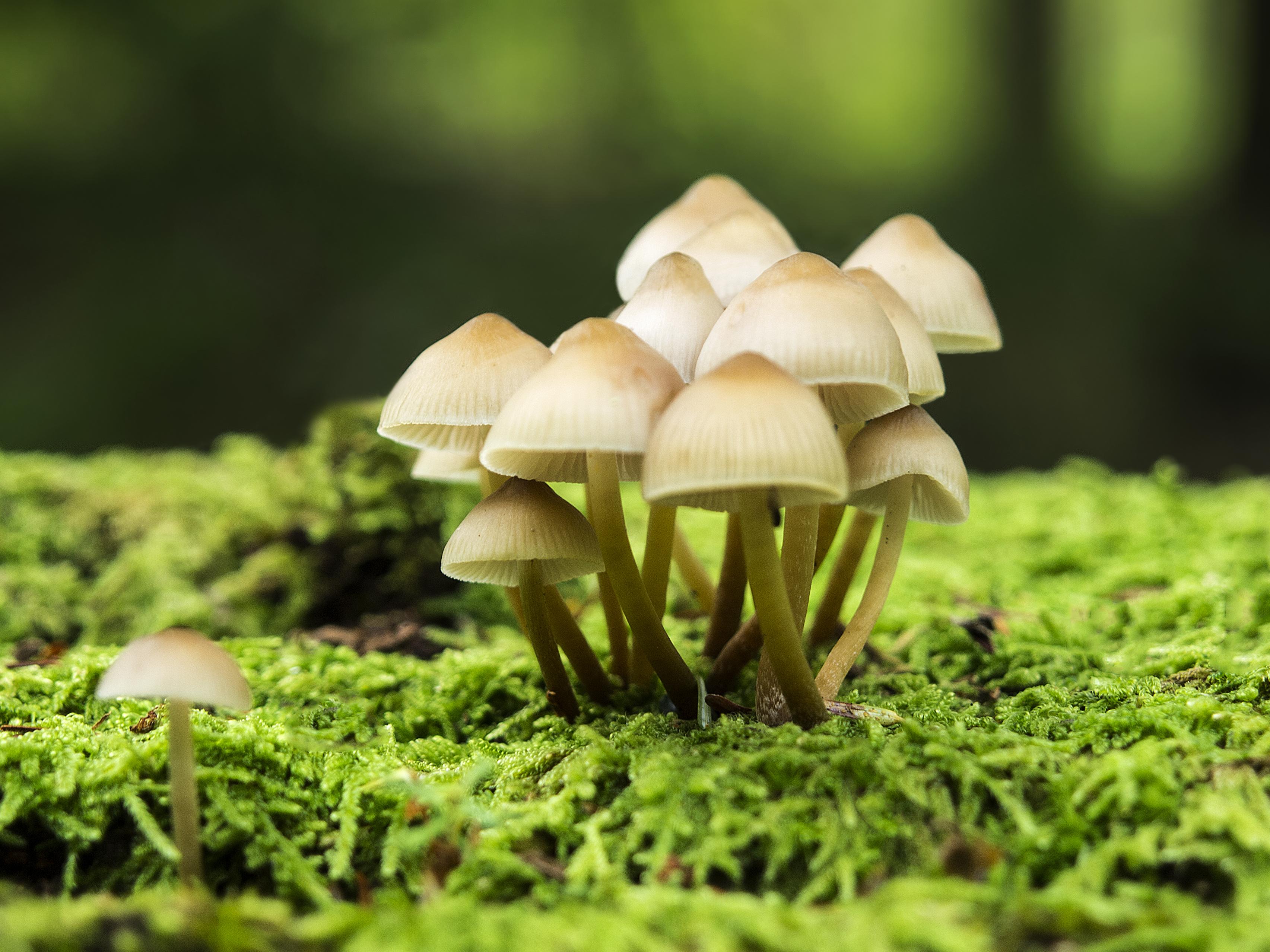 psychedelic mushroom wallpaper hd