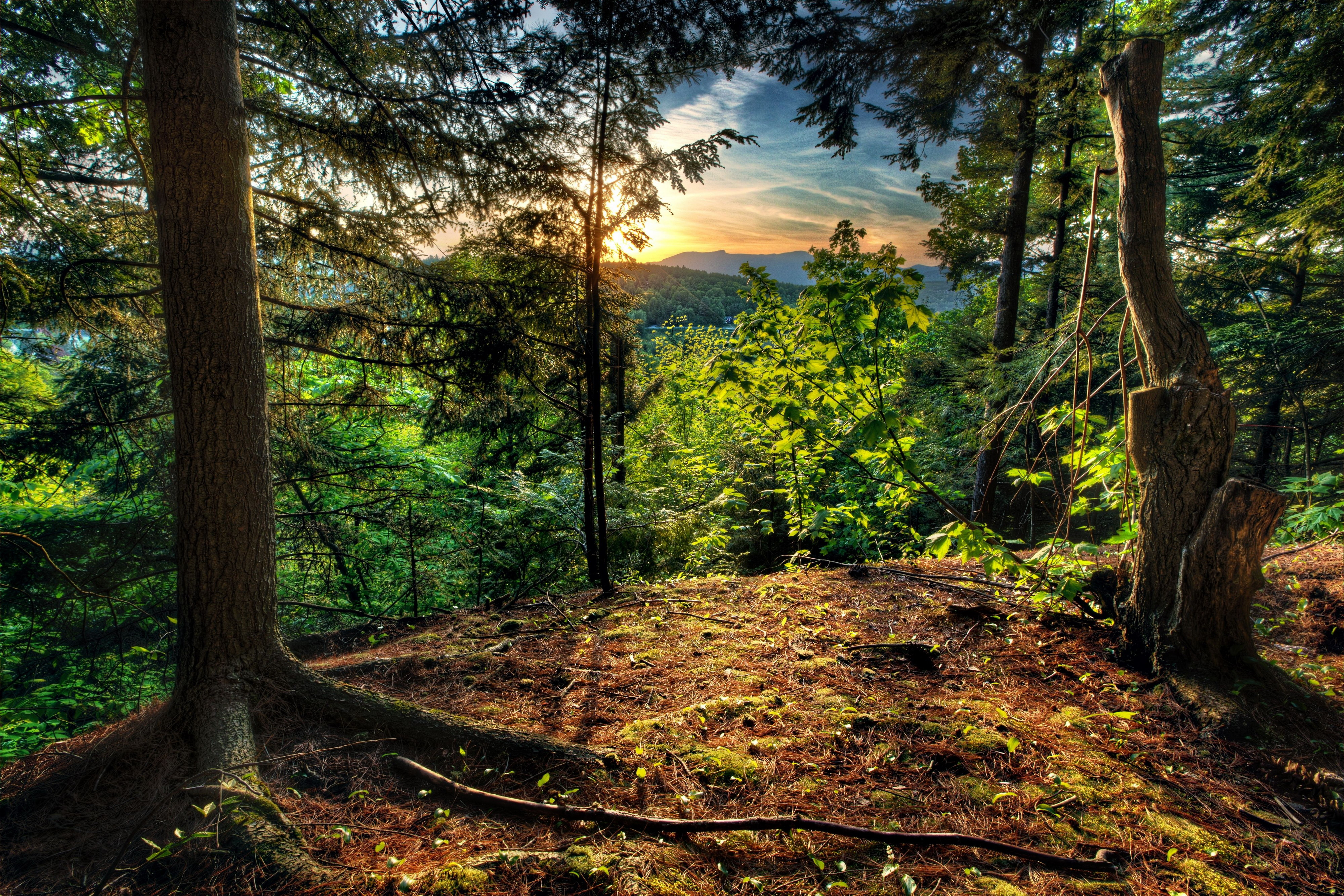 4k wallpaper nature redwoods - photo #30