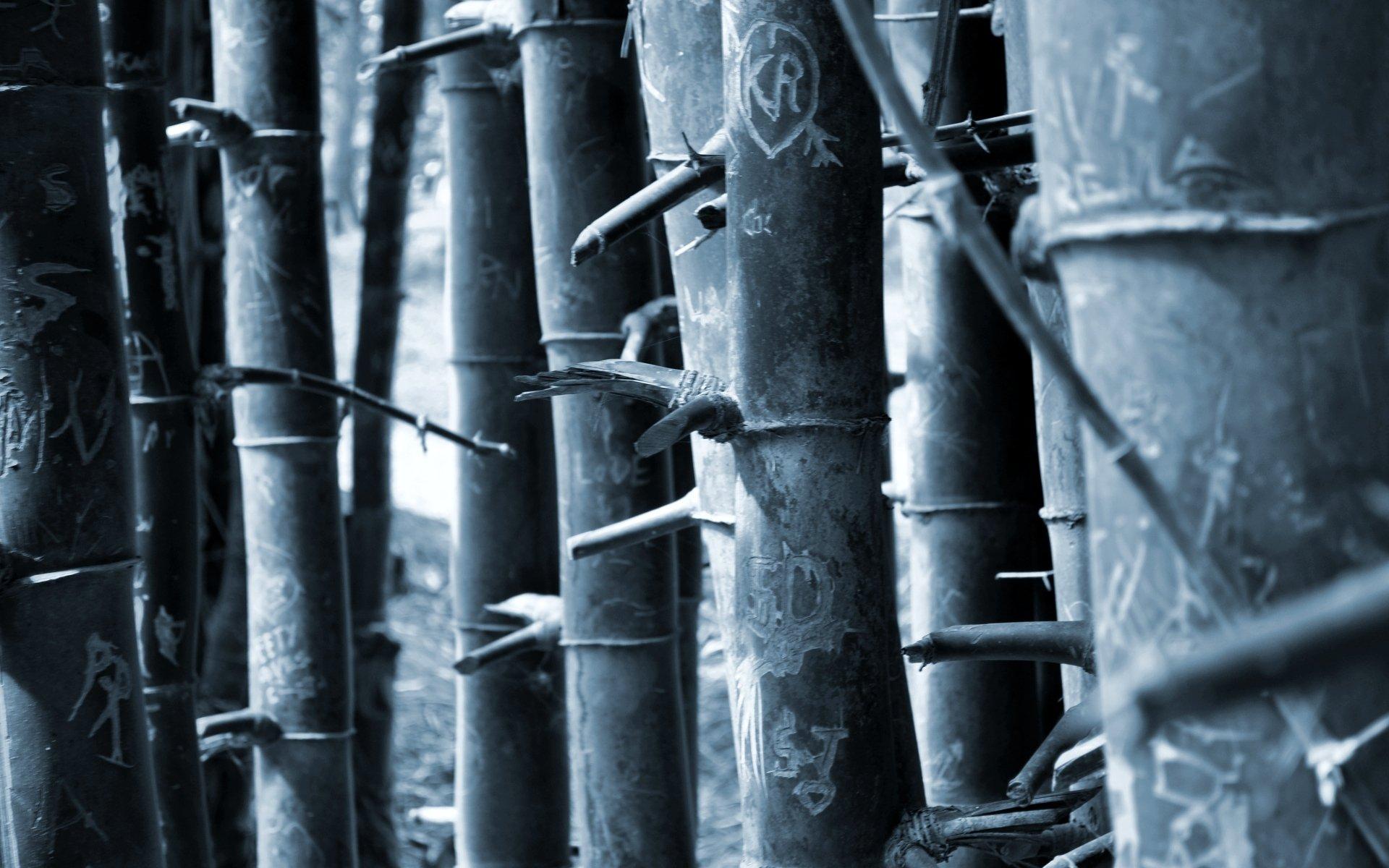 Earth - Bamboo  Wallpaper