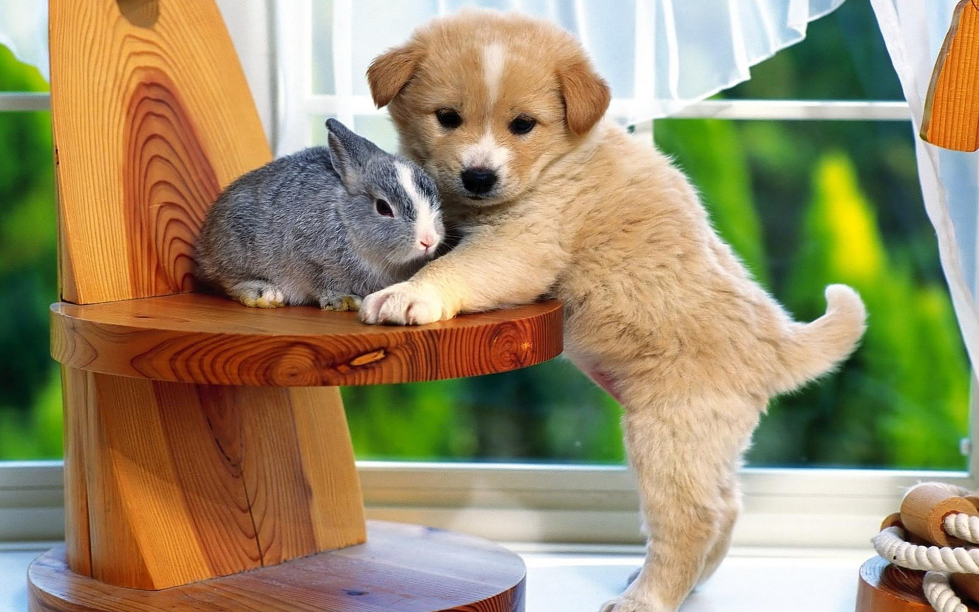 Animal - Cute  Dog Rabbit Wallpaper