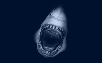 Animal - Shark Wallpapers and Backgrounds ID : 349424