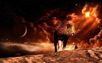 Animal - Lion Wallpapers and Backgrounds ID : 350082