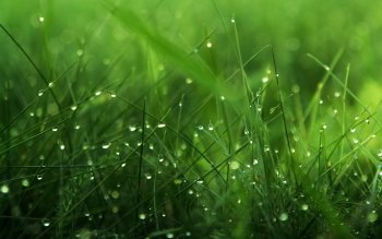 Earth - Grass Wallpapers and Backgrounds ID : 352360
