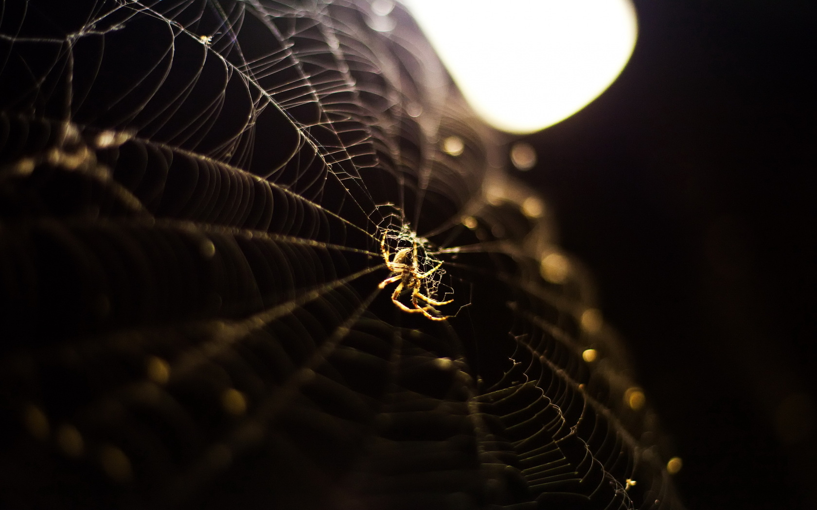 Spider Web Wallpaper And Background Image
