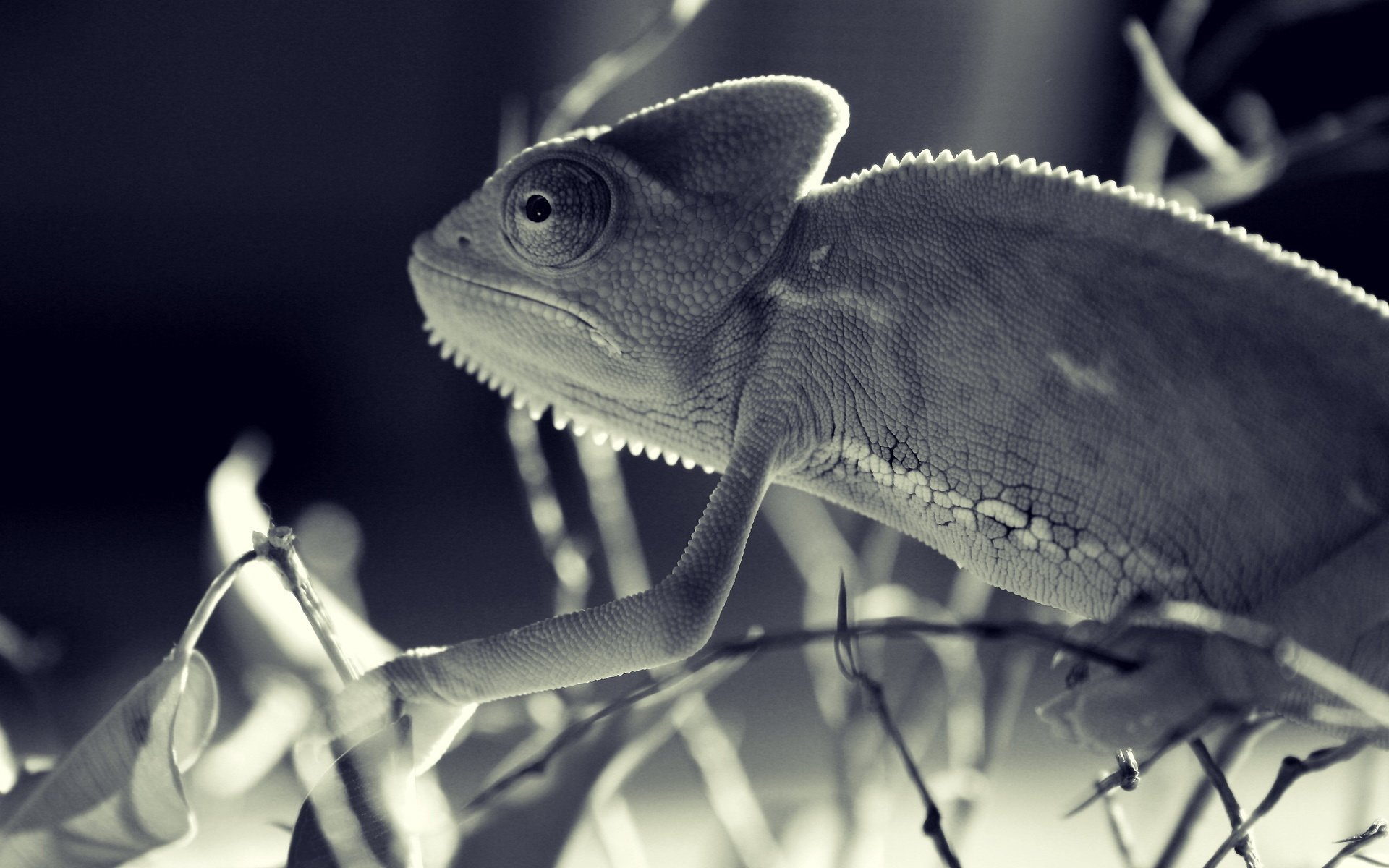 chameleon wallpaper 1920x1200 - photo #20
