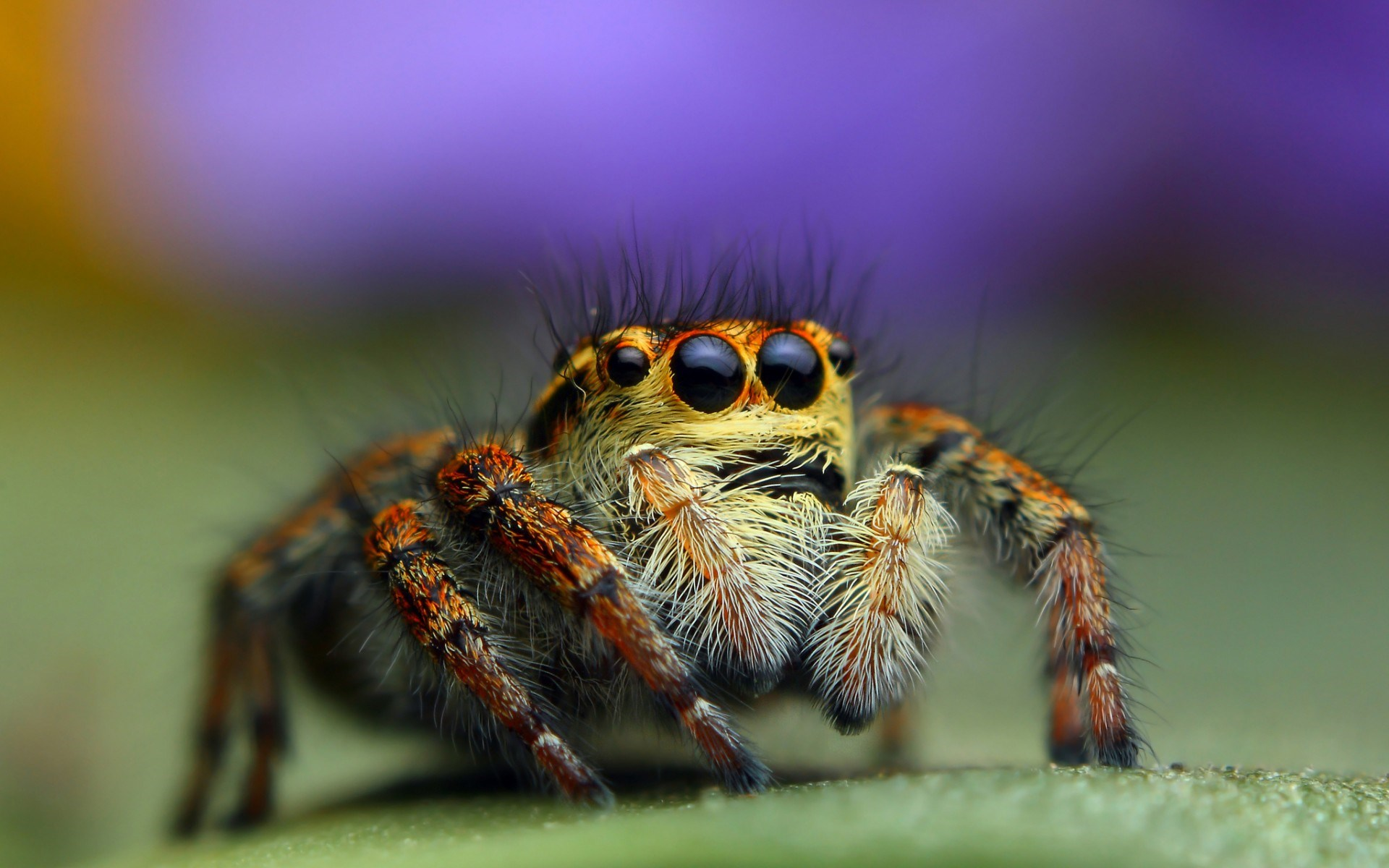 spider hd wallpaper | background image | 1920x1200 | id:354967