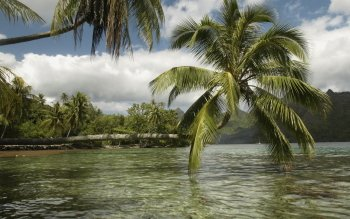 Tierra - Palm Wallpapers and Backgrounds ID : 356122