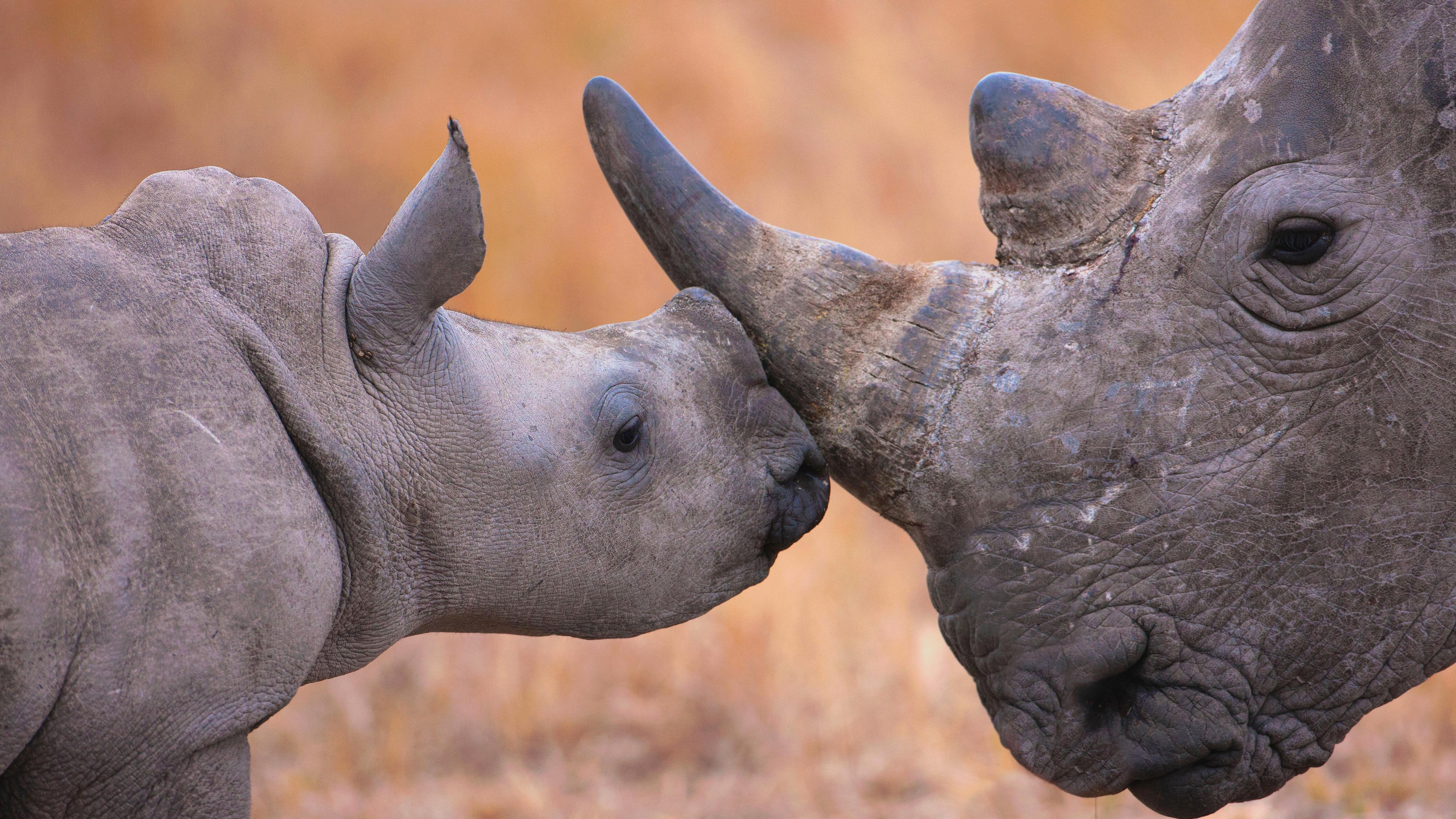 Rhino HD Wallpaper | Background Image | 1920x1200 | ID ...