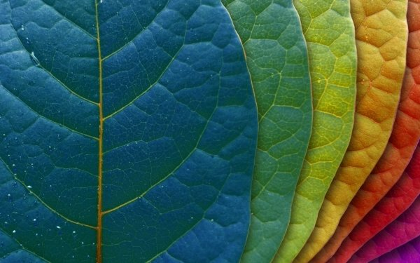HD Wallpaper | Background Image ID:361066