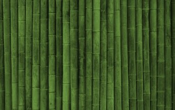 Tierra - Bamboo Wallpapers and Backgrounds ID : 362082