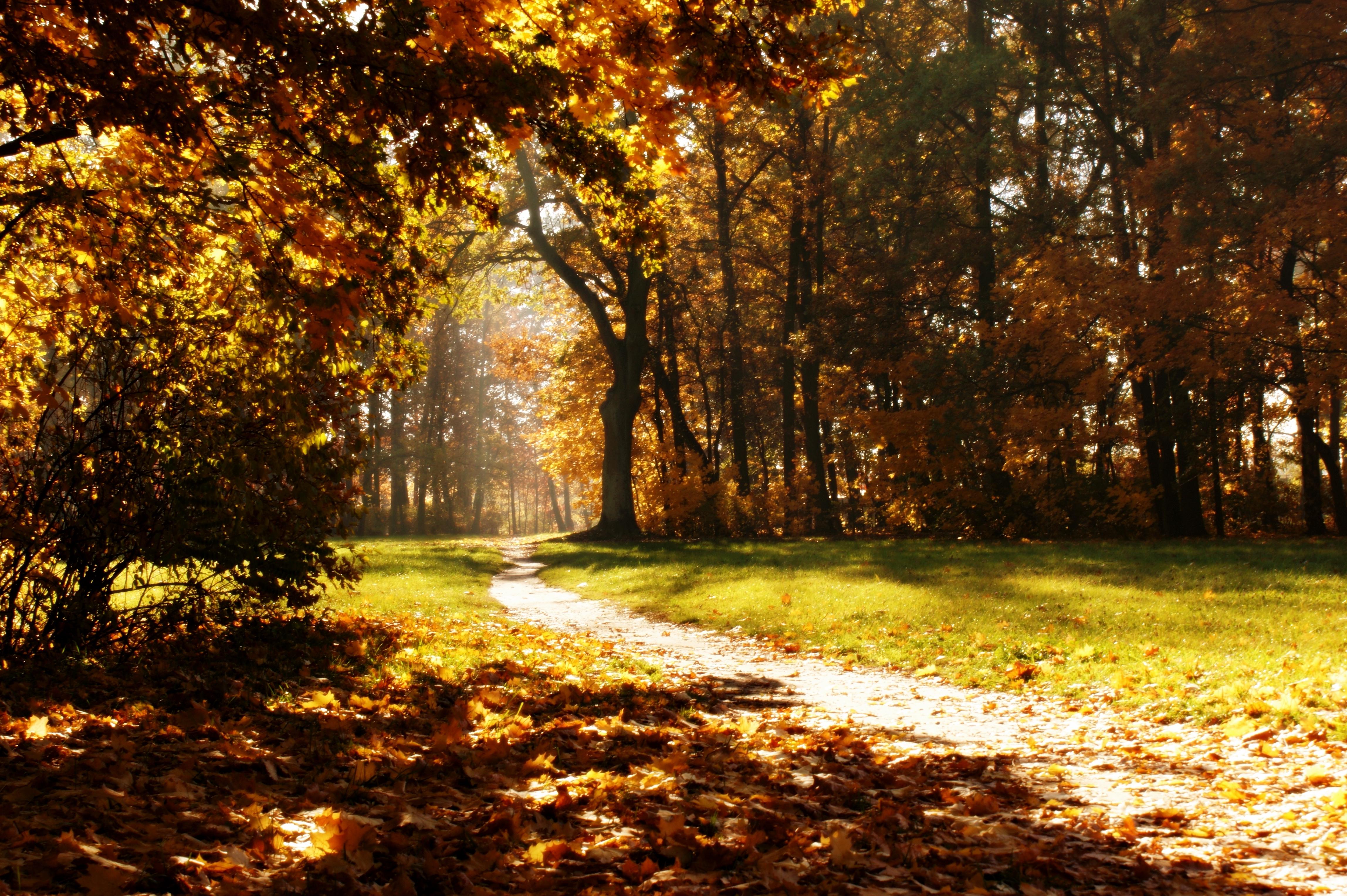 Bosque 4k ultra hd fondo de pantalla and fondo de for Sfondi autunno hd