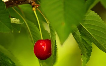 Alimento - Cherry Wallpapers and Backgrounds ID : 363685