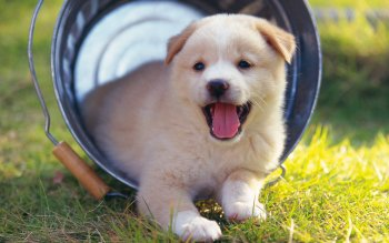 Animal - Puppy Wallpapers and Backgrounds ID : 364936