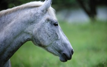 Animal - Horse Wallpapers and Backgrounds ID : 364992