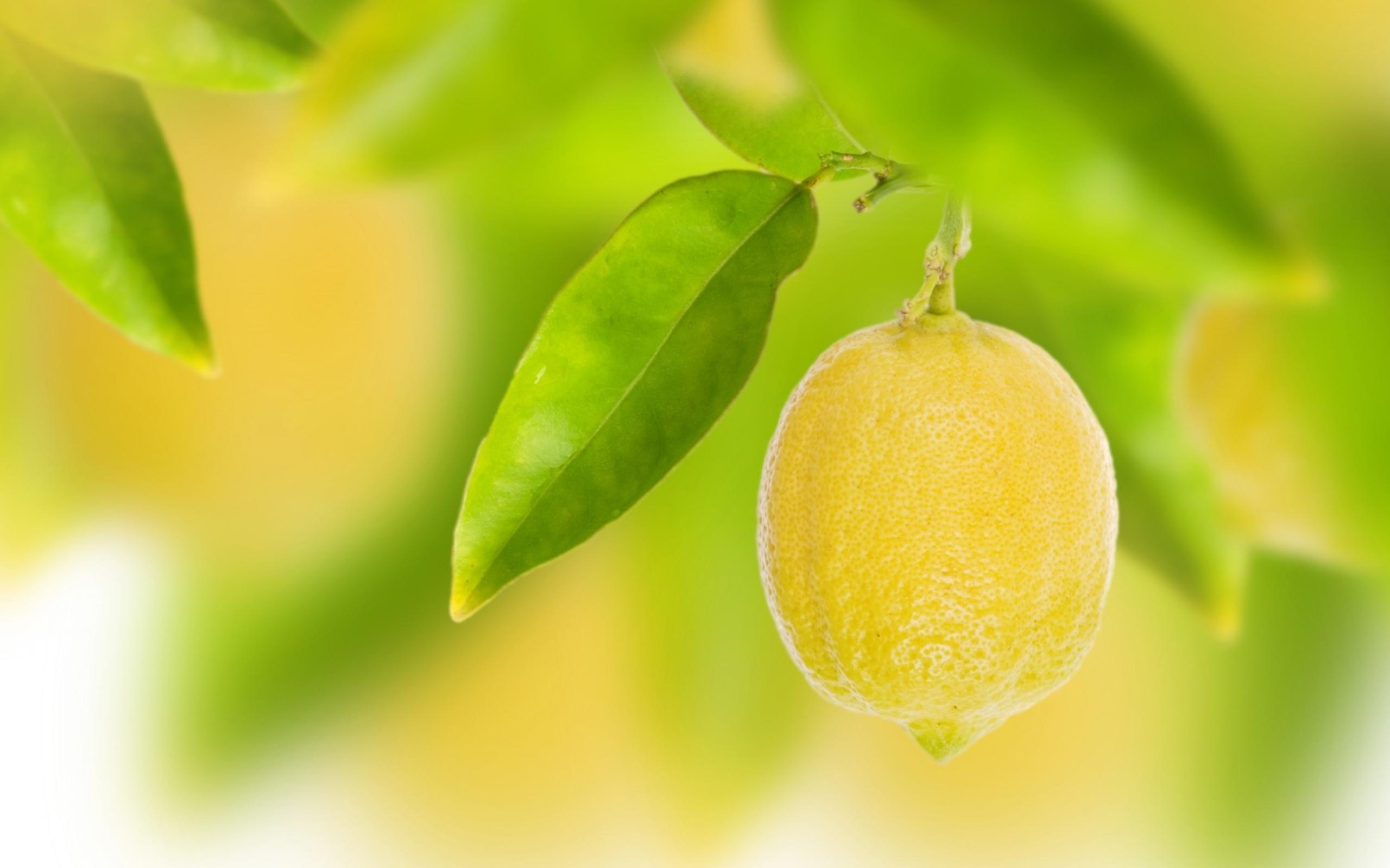 Lemon HD Wallpaper