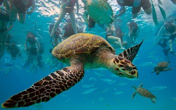 Animalia - Tortuga Wallpapers and Backgrounds ID : 365085