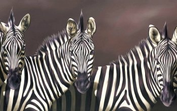 Animal - Zebra Wallpapers and Backgrounds ID : 365897