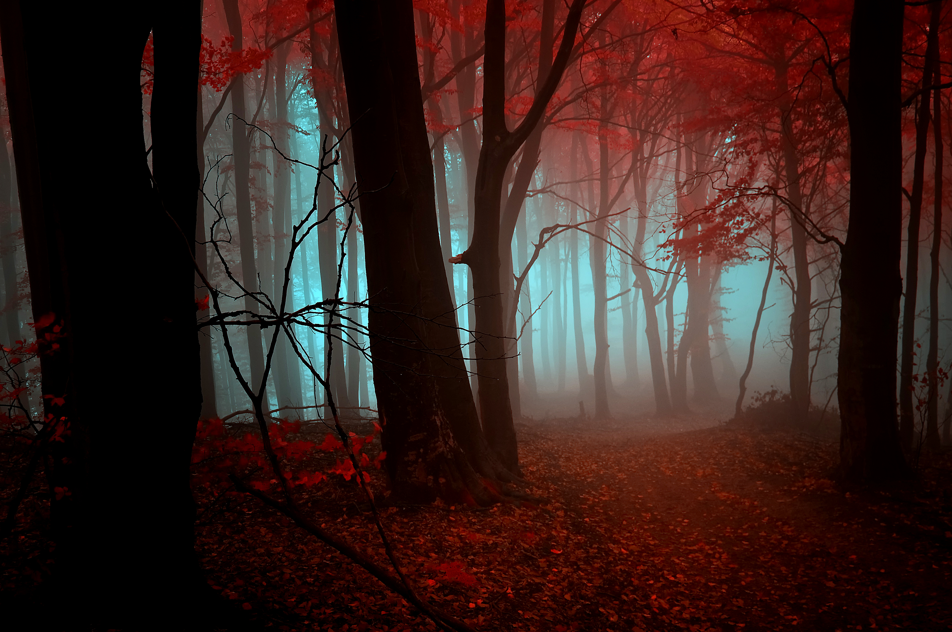 Forest Full HD Wallpaper And Background Image