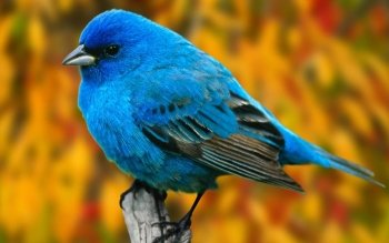 Animal - Bird Wallpapers and Backgrounds ID : 367334