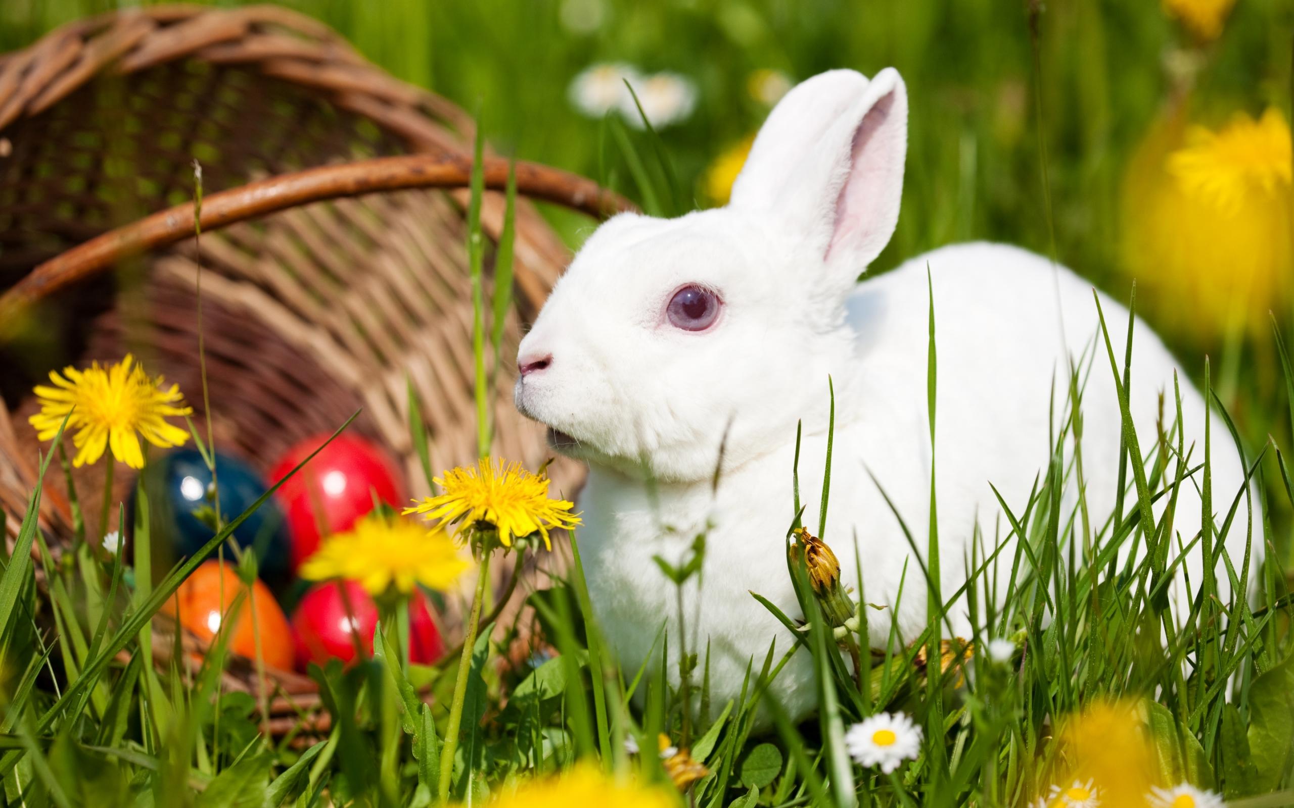 255 best Rabbit Stuff images on Pinterest  Bunny rabbit