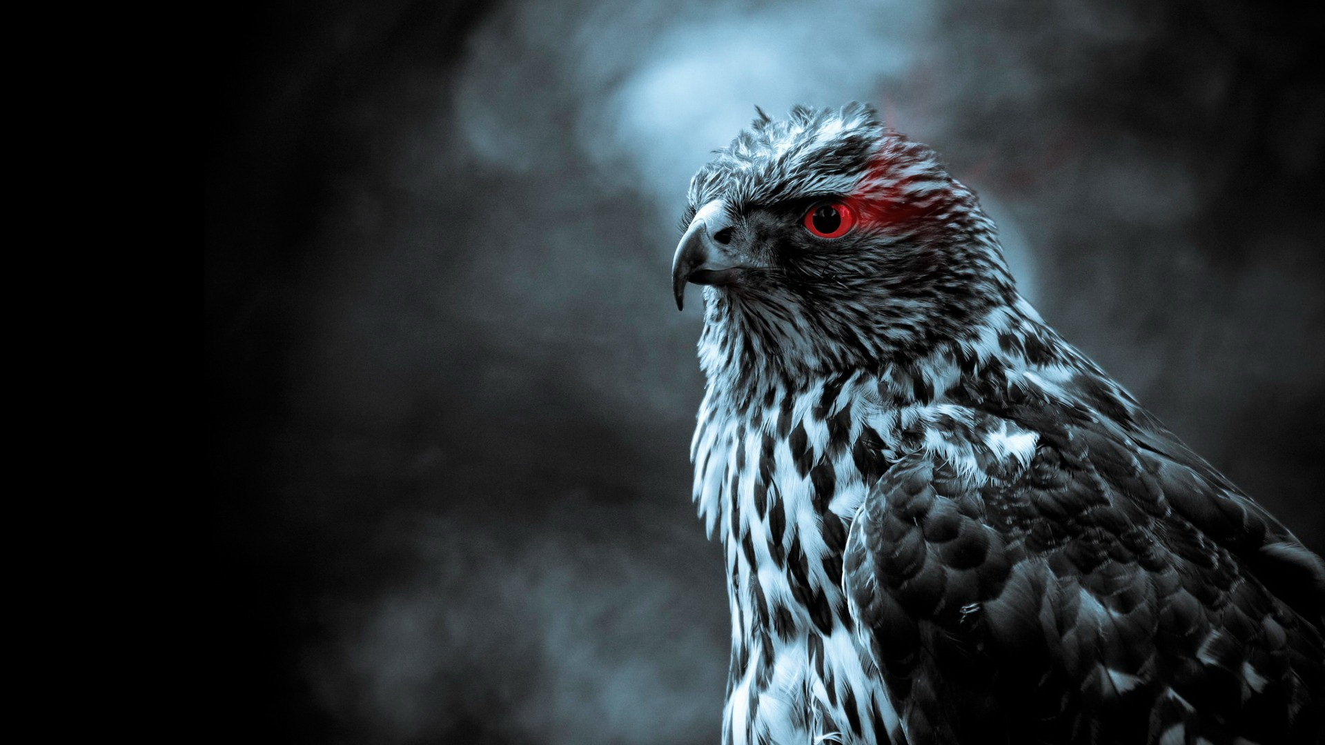 111 falcon hd wallpapers backgrounds wallpaper abyss - Hawk iphone wallpaper ...