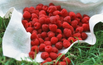 Alimento - Raspberry Wallpapers and Backgrounds ID : 370935
