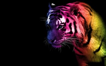 Artistic - Coloured Tiger Wallpapers and Backgrounds ID : 371337