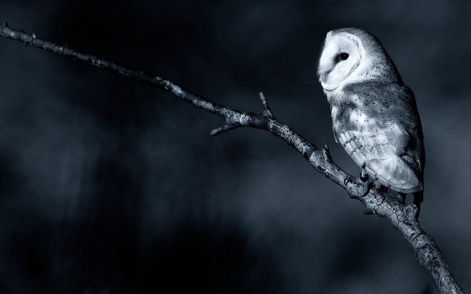 Owl Full HD Wallpaper and Background Image | 1920x1200 ...
