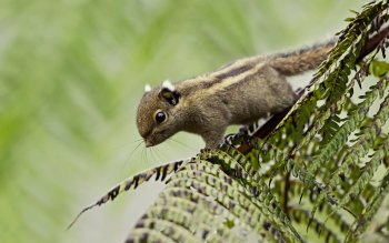 Animal - Squirrel Wallpapers and Backgrounds ID : 372713